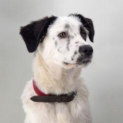 Dog collar - Osia